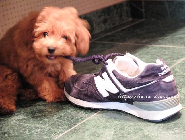玄関に靴を出しっ放しにできない理由