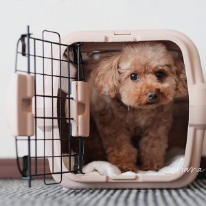 【犬動画】ペットの防災対策とクレートのしつけ