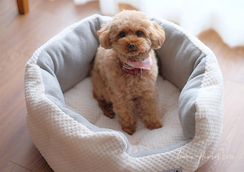 シンプル・かわいい☆ラディカ(RADICA)秋冬犬ベッド